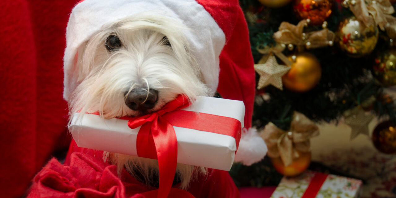 https://www.petsagogo.com/wp/wp-content/uploads/2020/12/Giving-a-dog-as-a-holiday-gift-1280x640.jpg