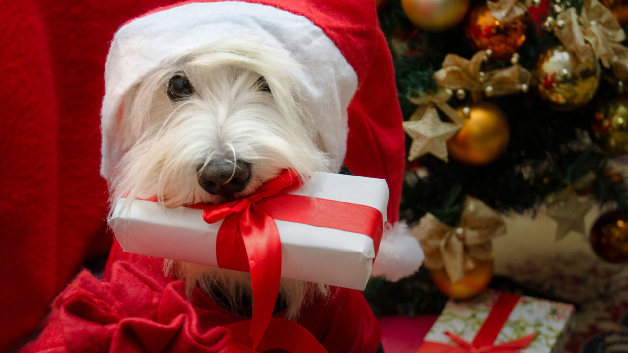 https://www.petsagogo.com/wp/wp-content/uploads/2020/12/Giving-a-dog-as-a-holiday-gift-1280x720.jpg