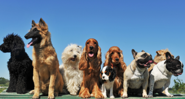 National Best Friends Day: The Importance of Socialization for Dogs
