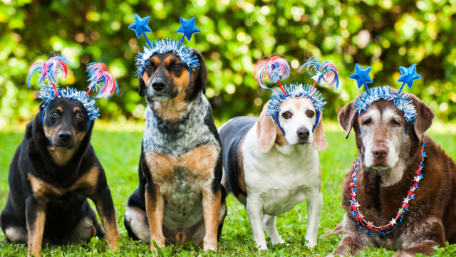 Five Tips to Manage Your Dogs Reaction to Fireworks This Year
