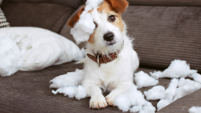 Heading Back to Work? What to Know About Separation Anxiety With Your Pup