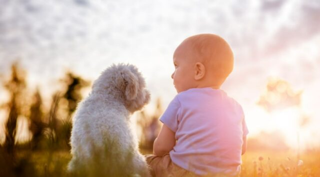 Having a Baby? This is How it Impacts Your Dog's Life