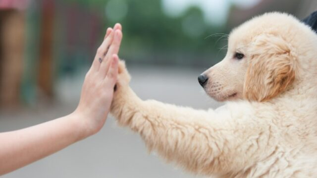 Top 5 Dog Breeds that Are Great with Kids