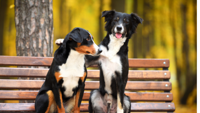 Thinking About Adopting a Second Pet? Here's What You Should Know First